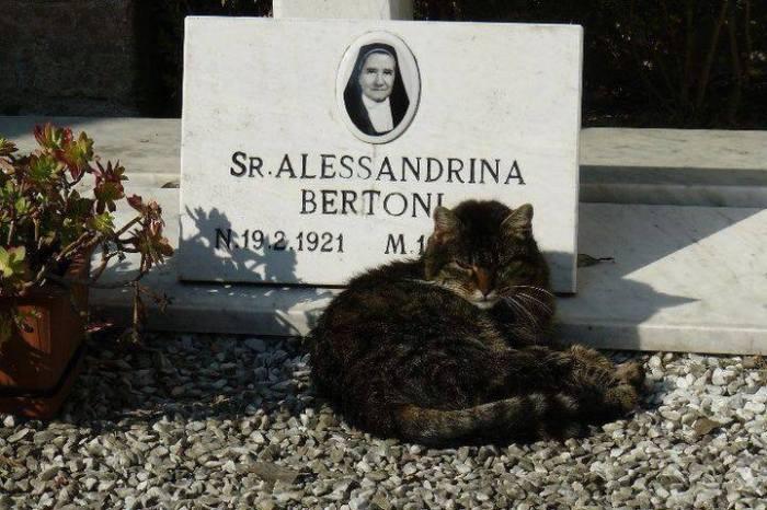 La suora di Ferrara-Certosa, quietamente accudita