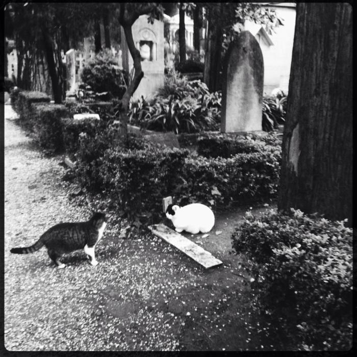 I mici pingui, cimitero Acattolico di Roma