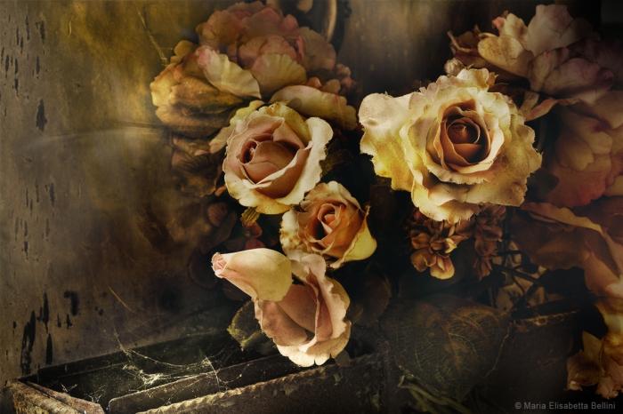 Tangere un petalo sbiadito. Sentire la polvere tra le dita. Lo sgretolarsi di un pezzo di tessuto tinto di rosa. I fili che lentamente si sciolgono e il fiore che sfilo dal bouquet della morte mi offre istanze d'una nervosa fragilità. Sento l'odore del vuoto e mi rassicura, purgandomi del peso della mia anima di piombo e di oro.