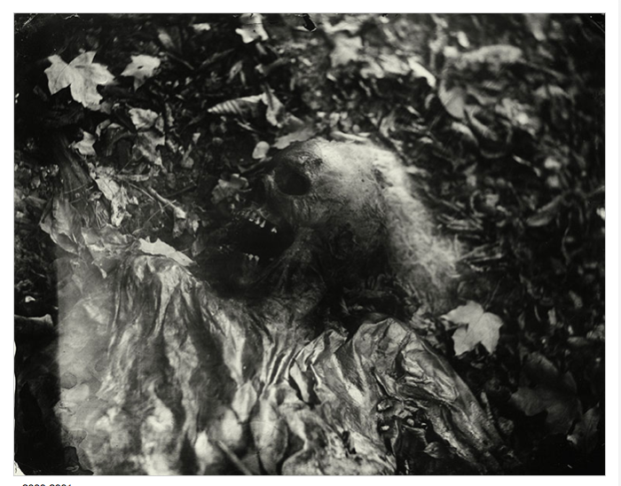 Sally-Mann-Body-Farm-2