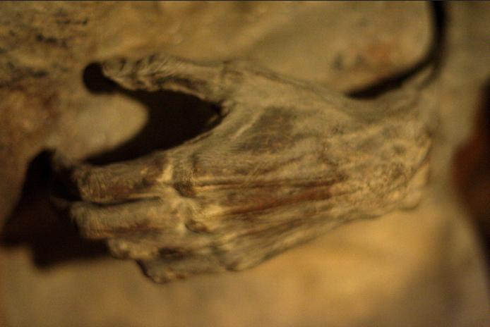Urbania-chiesa-dei-morti-mummia-2