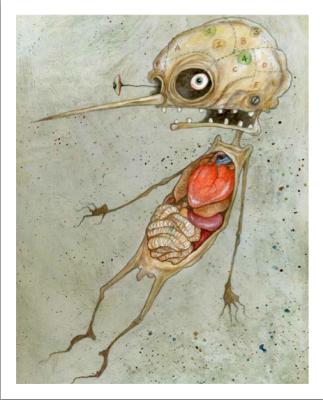 Pinocchio-Bessoni-anatomia