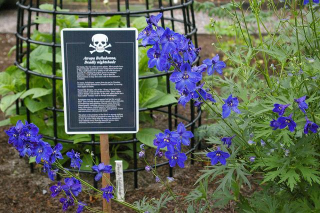 Poison_Garden_2