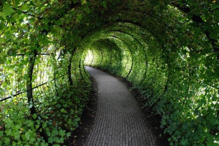 Poison_garden_6