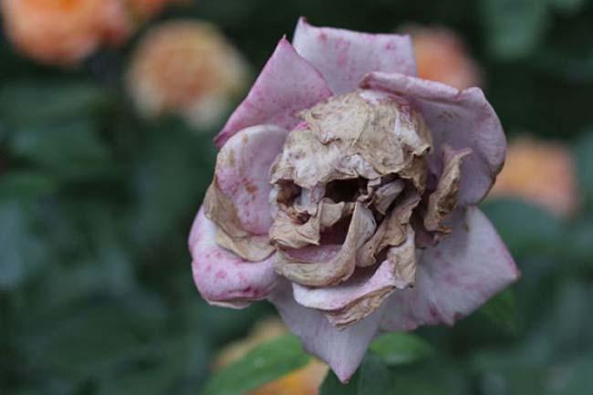 fiori-che-sembrano-altro037