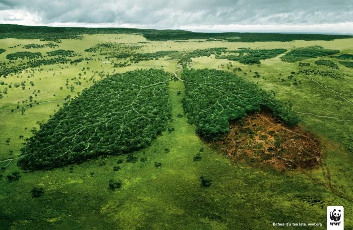WWF_Polmoni